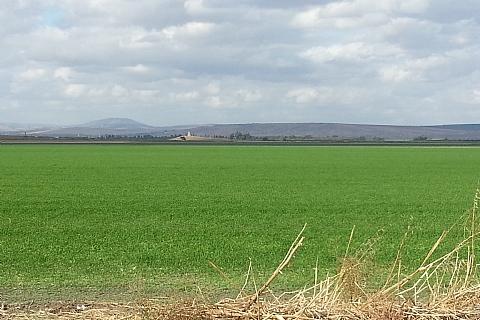 מגזר חקלאי